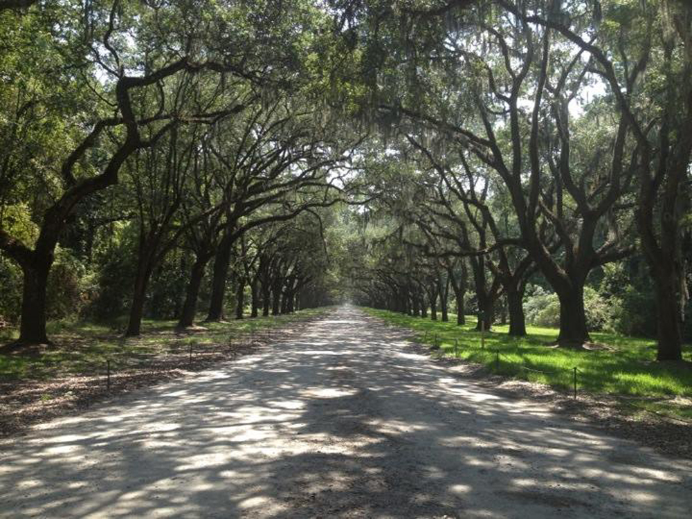 Wormsloe Entrance